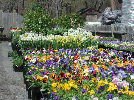 As A Worker At Kipps, Inc., A Marblehead Garden Center
