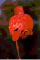 ibiswebmaria.jpg