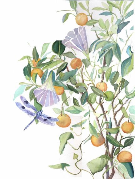 orangetreeweb.jpg