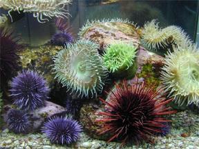 seaurchins.jpg
